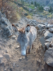 a donkey on the trail