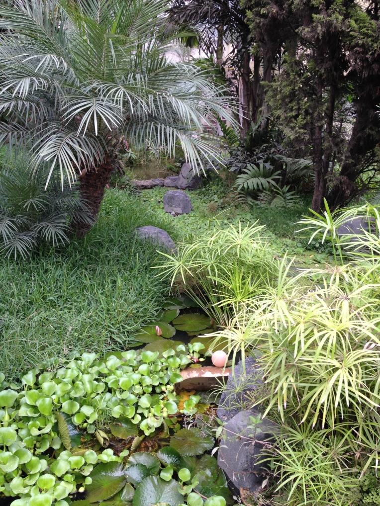 greenery & pond