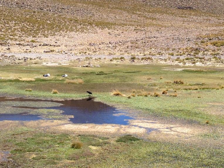 birds in the wetlands // A Slice of Peru