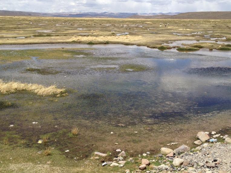 wetlands // A Slice of Peru