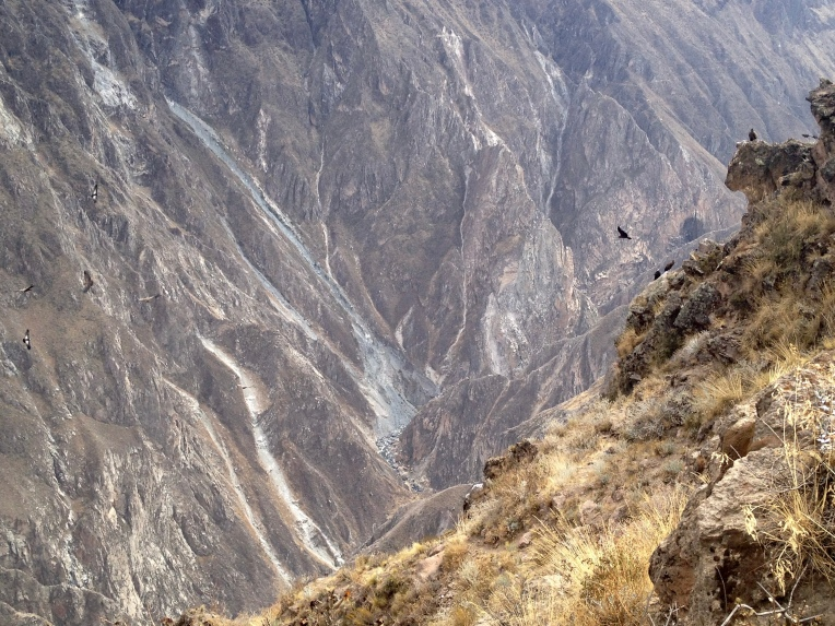 group of condors // A Slice of Peru