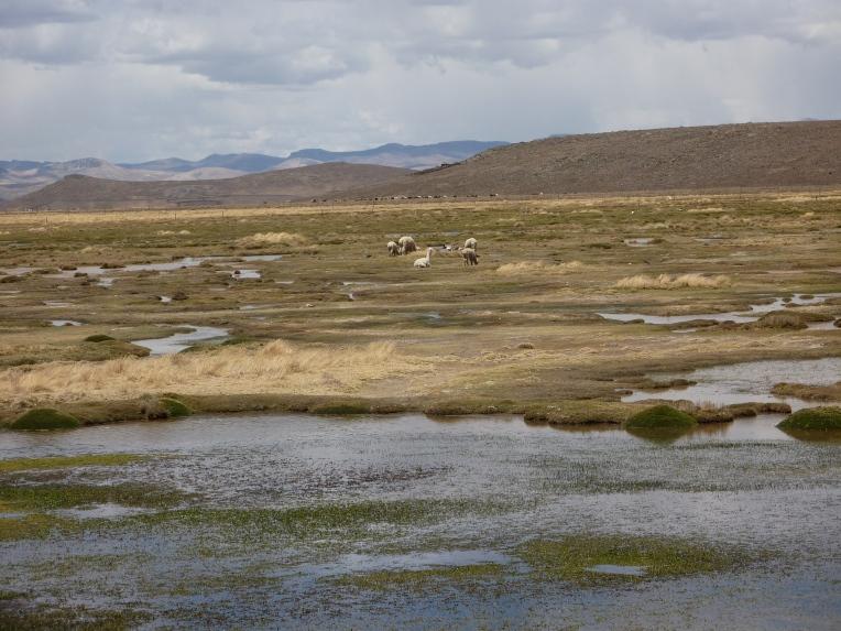 wildlife in the wetlands // A Slice of Peru