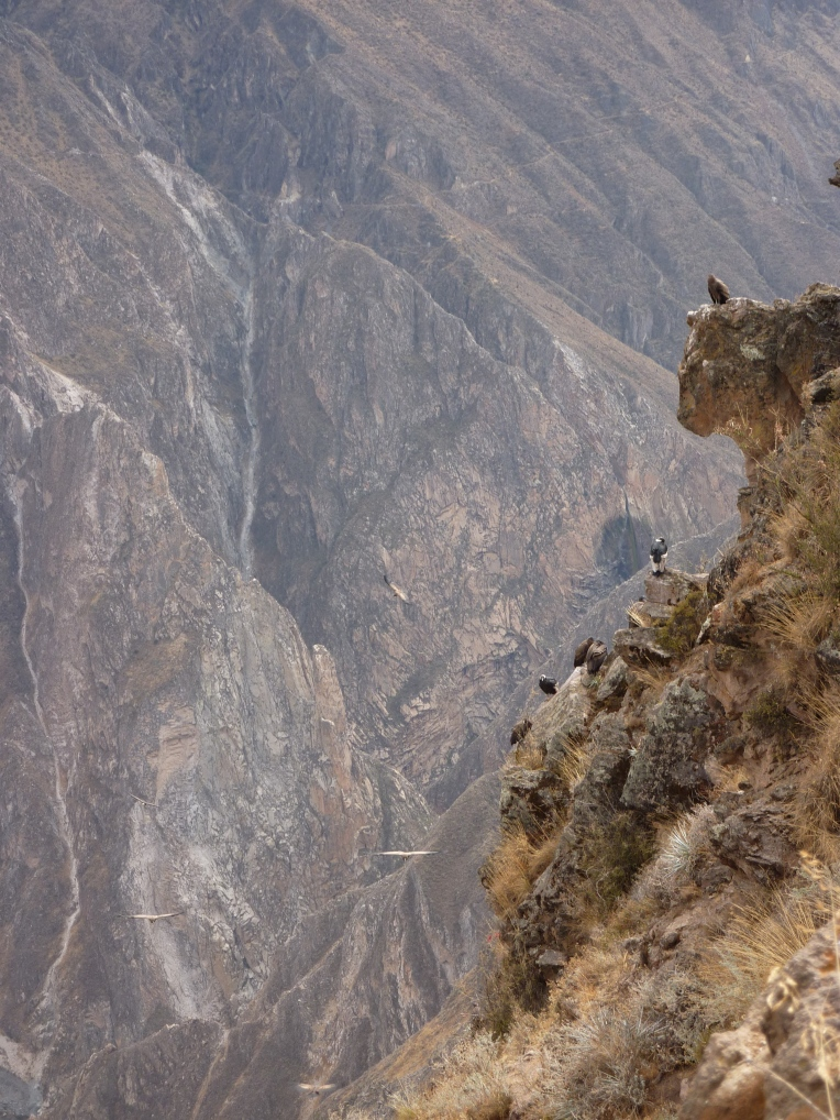 condors perching and flying // A Slice of Peru