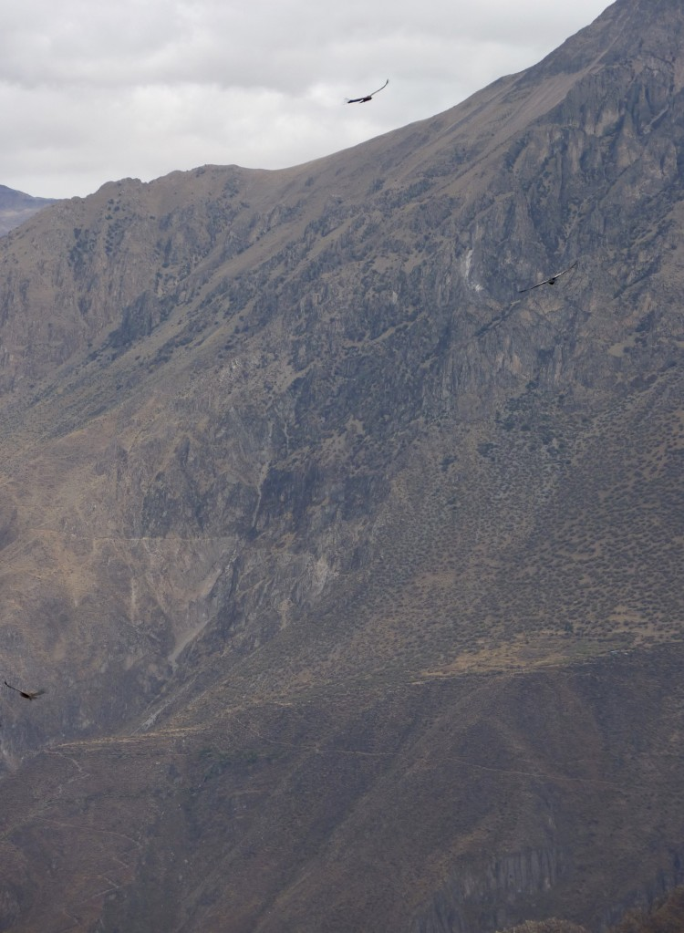 condors flying high // A Slice of Peru