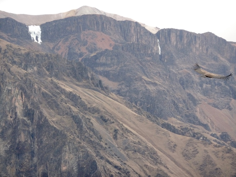 condor flying close by // A Slice of Peru