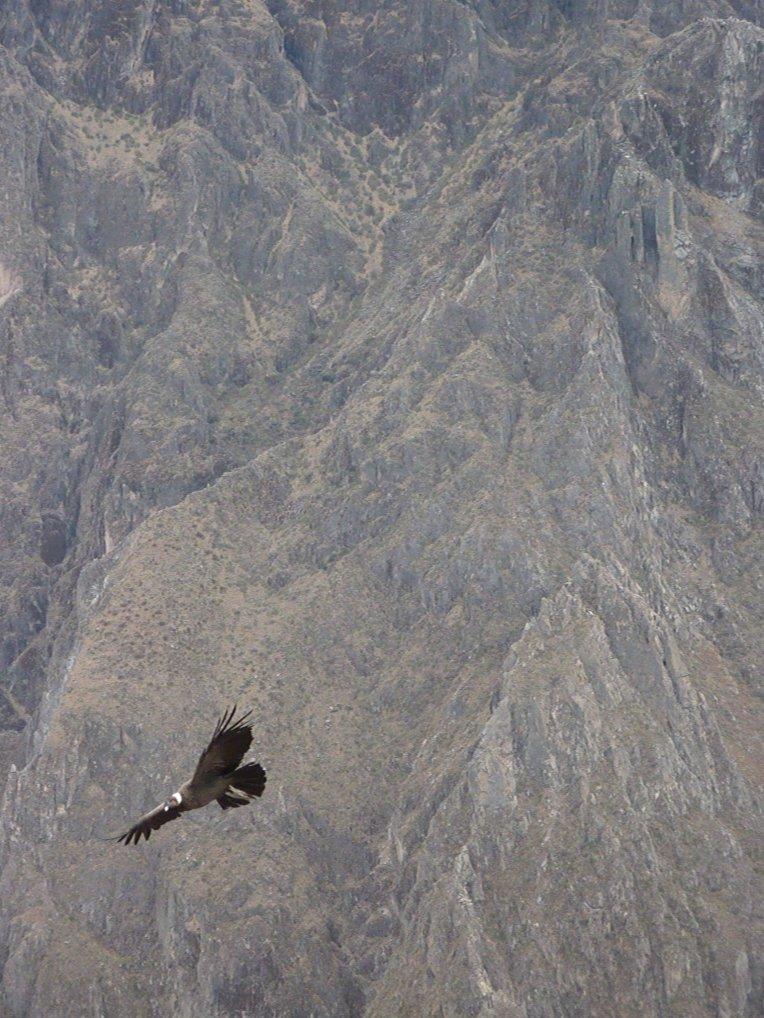 condor // A Slice of Peru