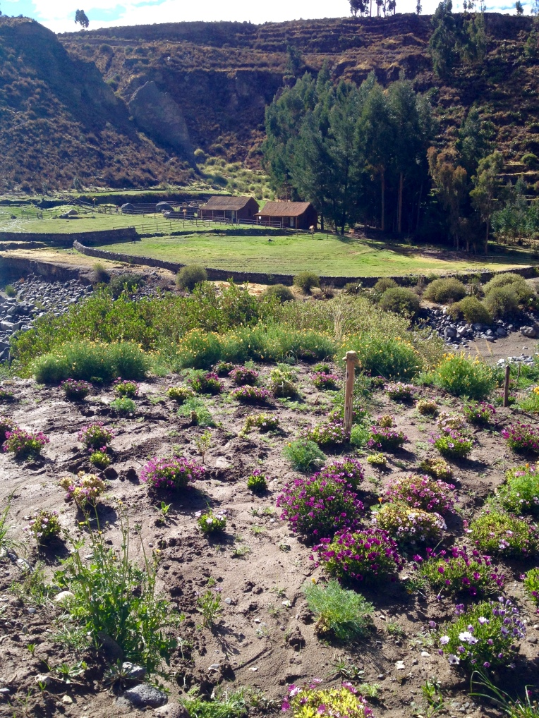 flowers - Colca Lodge // A Slice of Peru