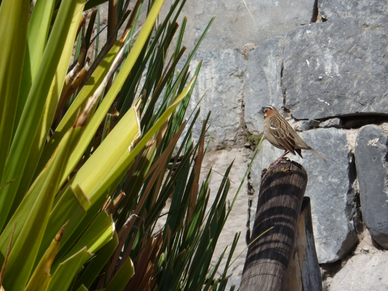 bird - Colca Lodge // A Slice of Peru