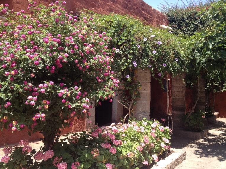 flowers, Santa Catalina Monastery, Arequipa // A Slice of Peru