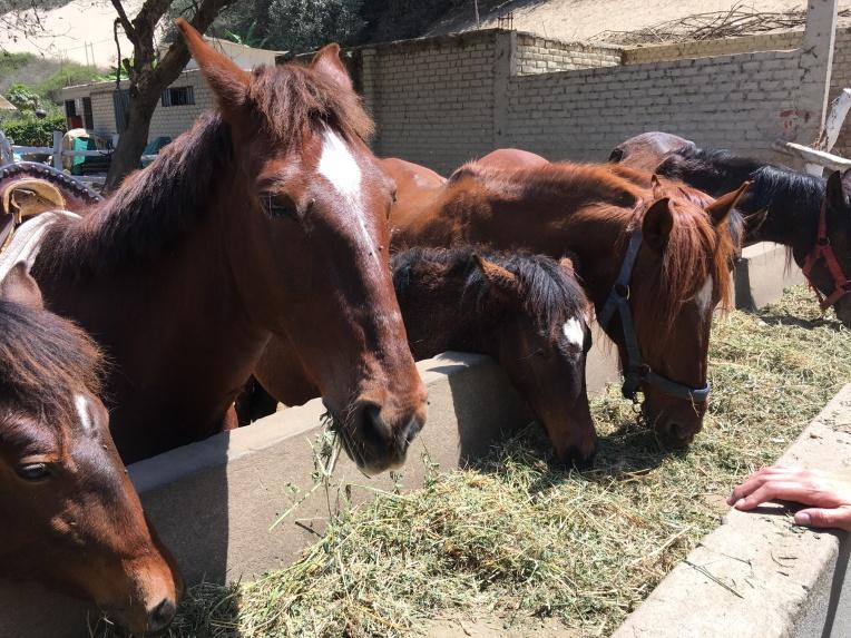 horses, Las Dunas // A Slice of Peru