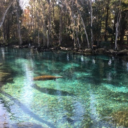 Three Sisters Springs, Crystal River // The Little Edition