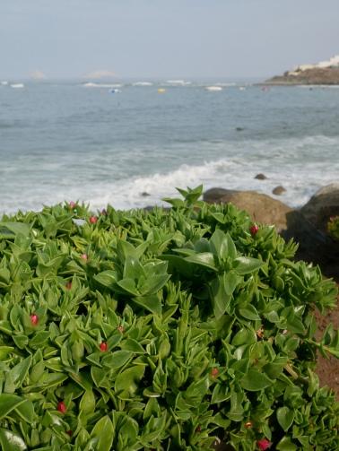 Punta Hermosa, Lima, Peru // The Little Edition