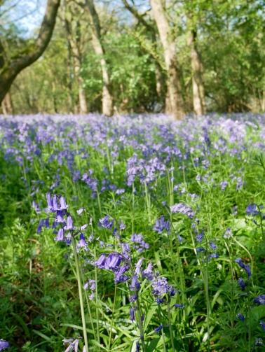 Brampton Wood, Cambridgeshire // The Little Edition