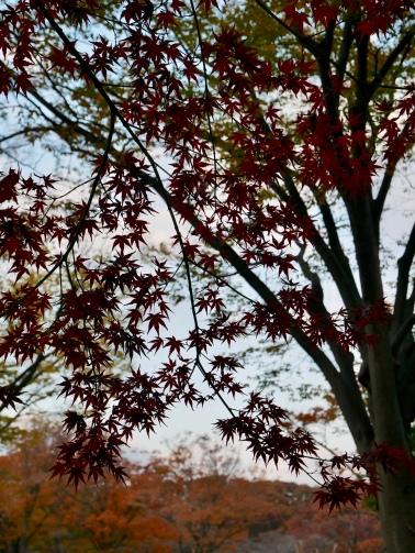Yoyogi Park, Tokyo, Japan // The Little Edition